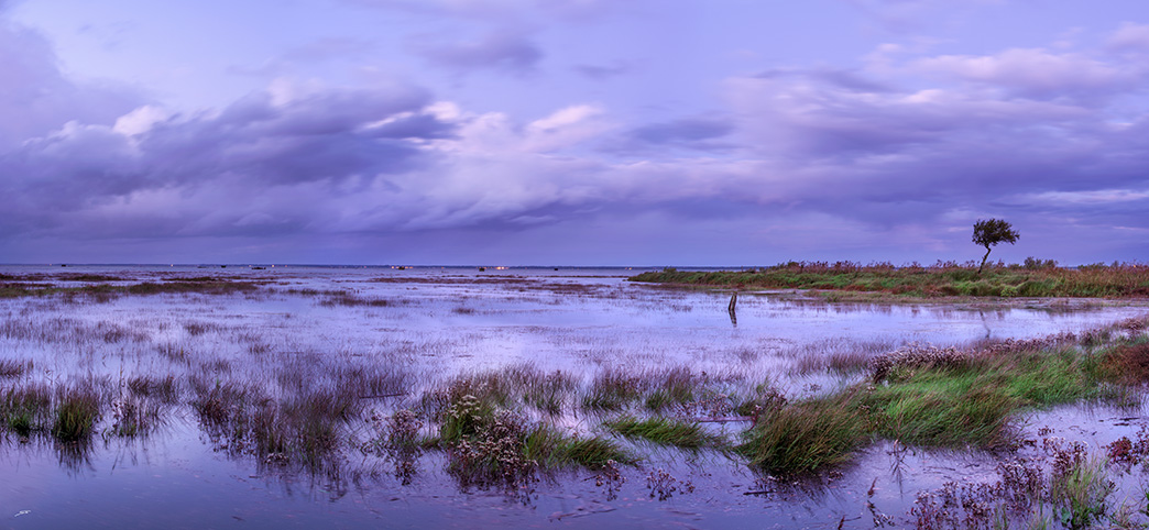 sur le sentier du littoral du Bassin d'Arcachon vers le port de Meyran