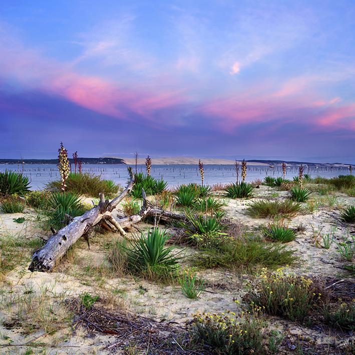 La conche du Mimbeau au coucher du soleil aux lumières de l'automne par le photographe du Bassin d'Arcachon Stéphane Scotto