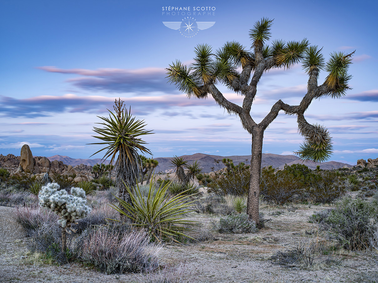 Joshua Tree National Park par le photographe Stéphane Scotto