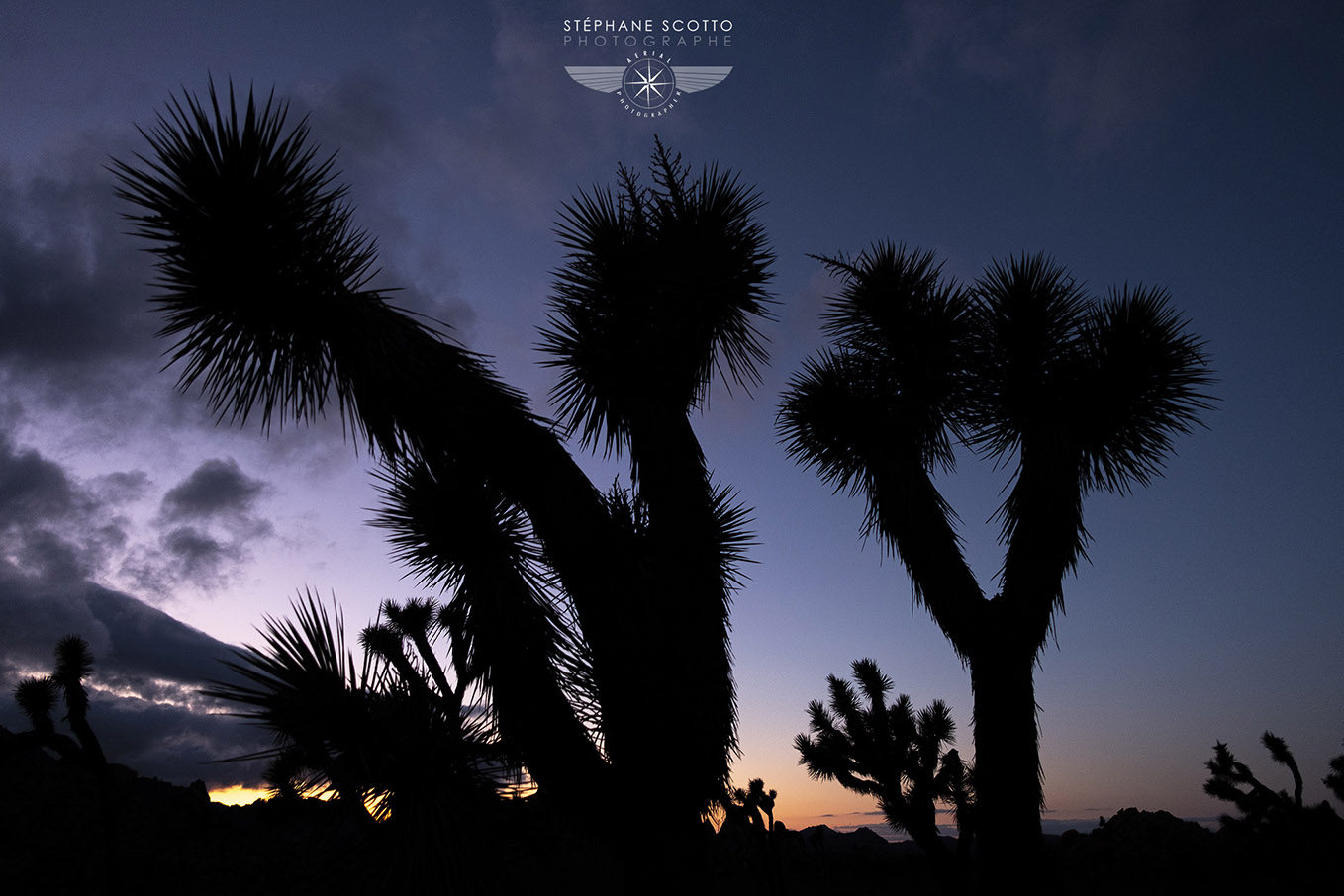 Joshua Tree California